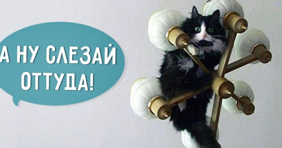 16фраз, которые мыговорим своему коту