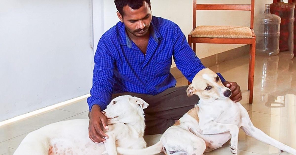 Мужчина 10лет копил деньги, чтобы помочь бездомным животным