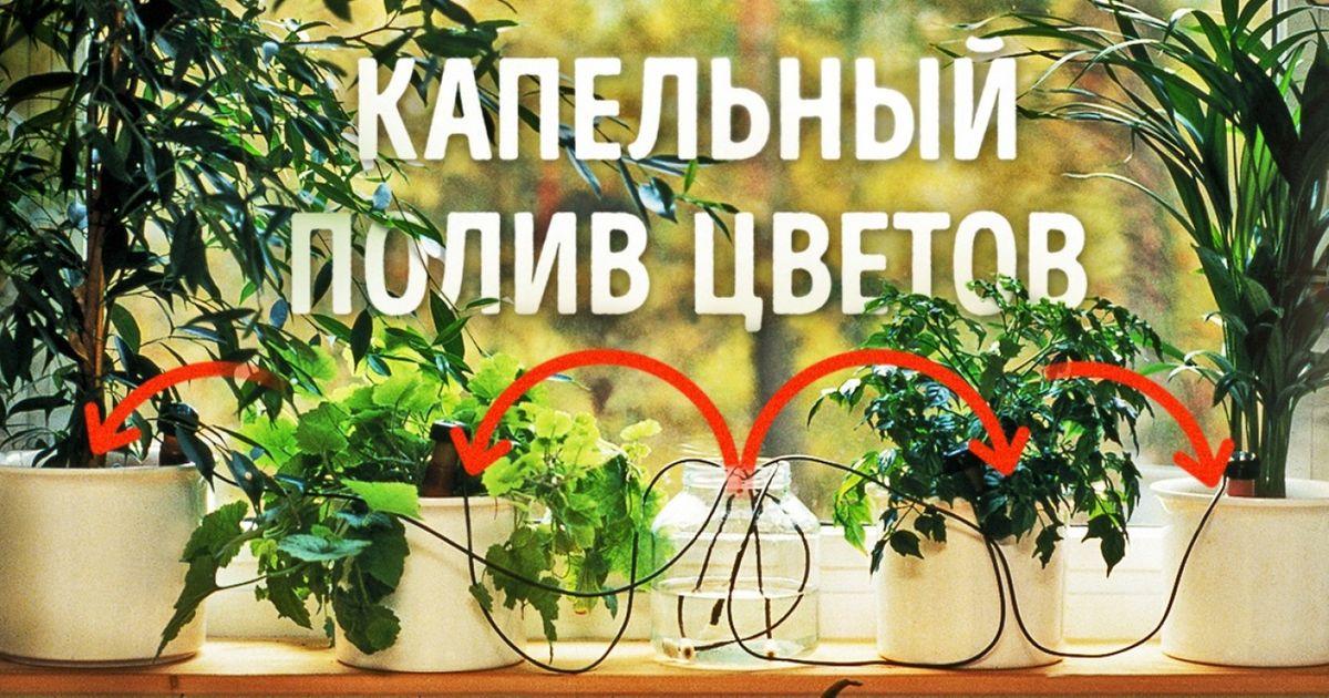 Как сделать так, чтобы растения поливали себя сами