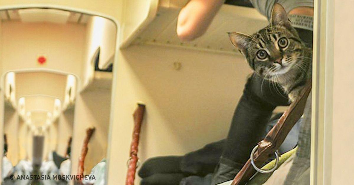 8услуг, окоторых мынедогадываемся, когда путешествуем поездом