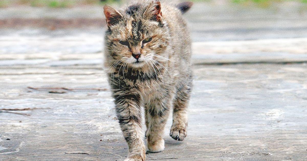 Суровые дворовые коты