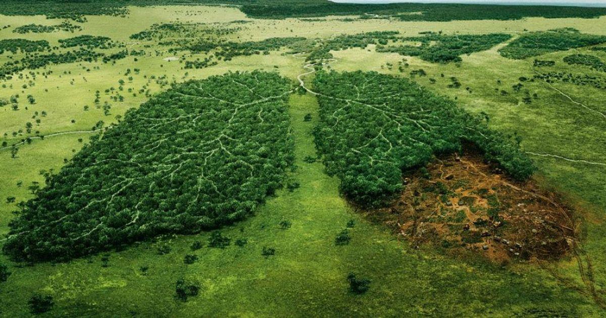 ВНорвегии больше нельзя вырубать деревья. Ниодно деревце, слышите!