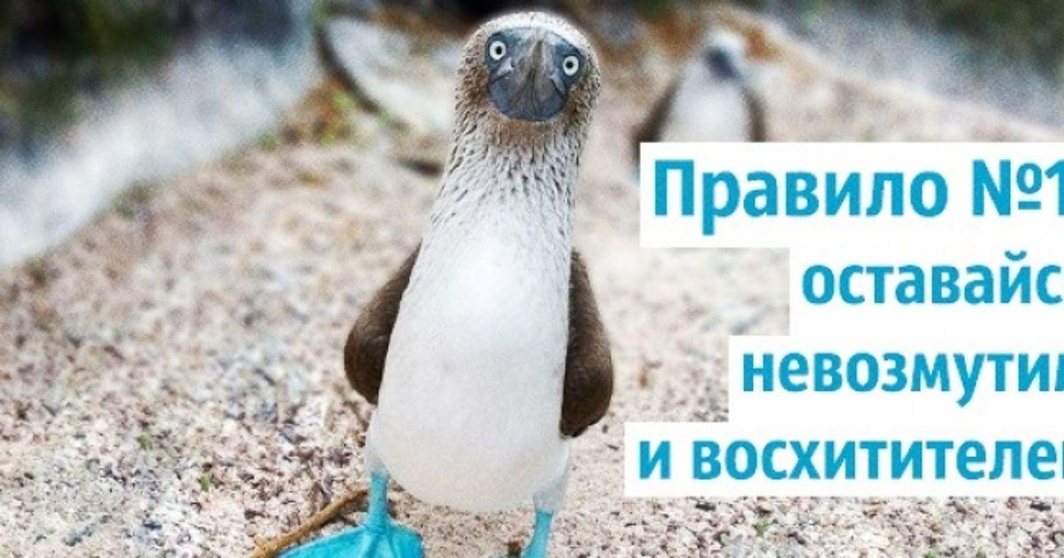 Правила жизни голубоногих олуш