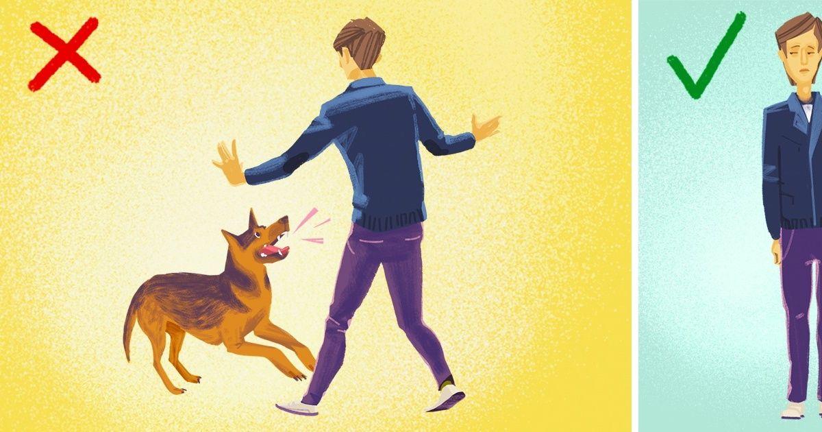 Что делать, если навас напала собака