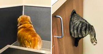 27животных, которые нивкакую нехотят показываться ветеринару