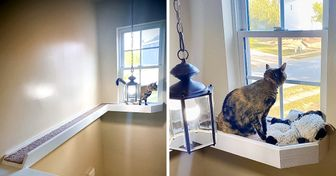 20 кошек, для которых их владельцы готовы построить хоть замок (Ну или что-нибудь попроще)