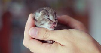 15крошечных малышей, которые помещаются наладошке