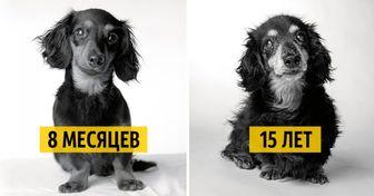 Как взрослеют собаки. Любопытный итрогательный фотопроект