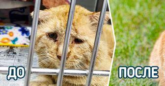 История кота, который мог сгинуть так же, как тысячи бездомных животных, но в дело вмешалась любовь