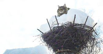 Весна пришла— коты прилетели!