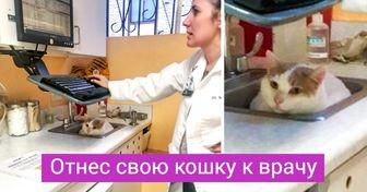 20+ случаев из практики ветеринаров, в чьих руках — тысячи крохотных жизней