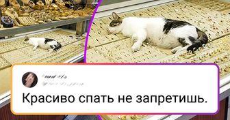 20+ пушистых аргументов, доказывающих, что для кошек нет запретных мест. Нигде