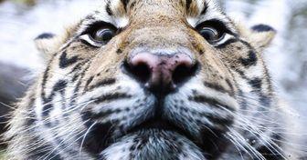 20фотографий, накоторых природа смотрит натебя