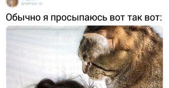 16 котов, которые ни секунды не могут прожить без своего человека