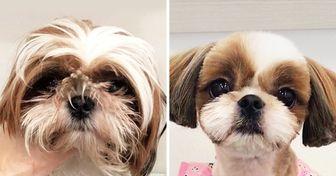 19 собак, которые посетили салон красоты для питомцев, и теперь их не узнать