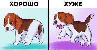 Простой тест для щенков, который поможет вам за 5 минут выбрать идеального питомца