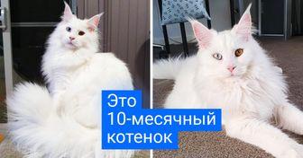 20 кошек, в которых больше мистики, чем в «Секретных материалах»