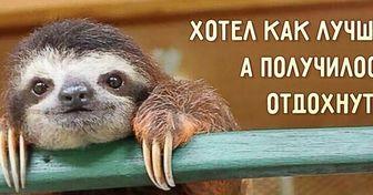 Правила жизни ленивцев