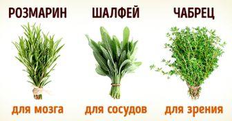 8полезных трав, которые можно вырастить дома
