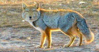 11уникальных животных, которых фотошопила сама природа
