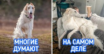 12 ленивых пород собак, которые могут составить конкуренцию любому котику