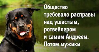 «Не надо обижать маленьких!» Рассказ о том, как одна собака оказалась милосерднее толпы людей