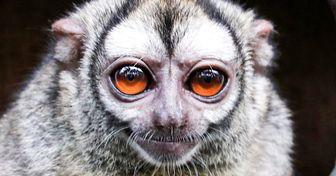 15+ очаровательных животных, которых можно встретить только в одном месте на Земле