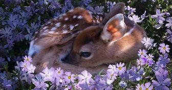 15невероятно милых животных, которые захватят этот мир