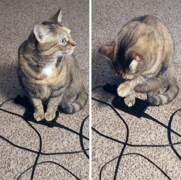 20+ котов, которые не упустят случая занять местечко получше