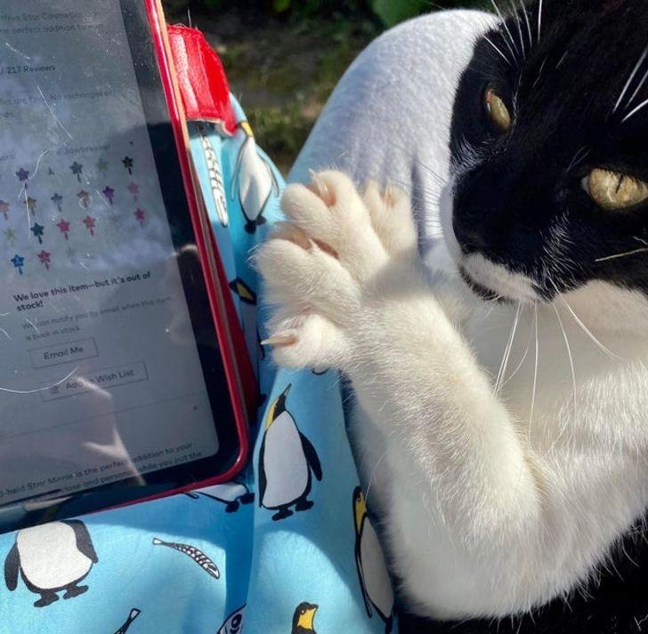 20+ доказательств того, что не родился еще человек, который смог бы дать отпор кошачьей наглости