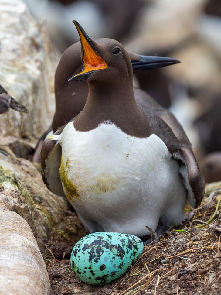 12 животных, которые откладывают слишком странные для этого мира яйца