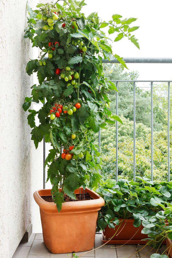 18способов устроить сад усебя дома