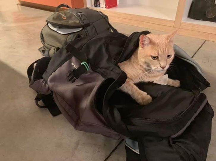 Познакомьтесь с котом, который потратил парочку из своих 9 жизней, но не растерял оптимизма