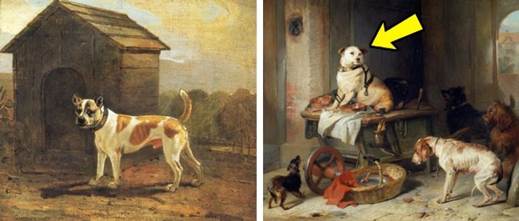 8исчезнувших пород собак, которых неосталось даже нафотографиях
