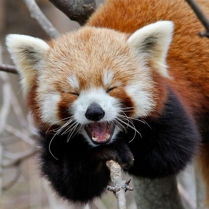 20+животных, которые на90% состоят изочарования