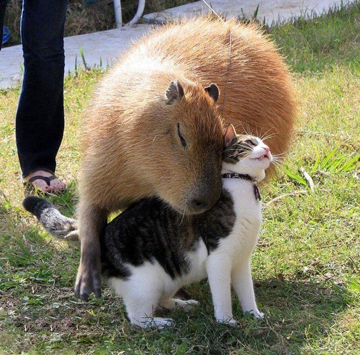 20+ фото нежной дружбы животных, которые мгновенно восстанавливают внутреннее равновесие