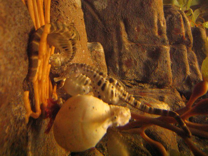 15 + доказательств того, что беременность добавляет очарования всем животным (Даже скорпионам)