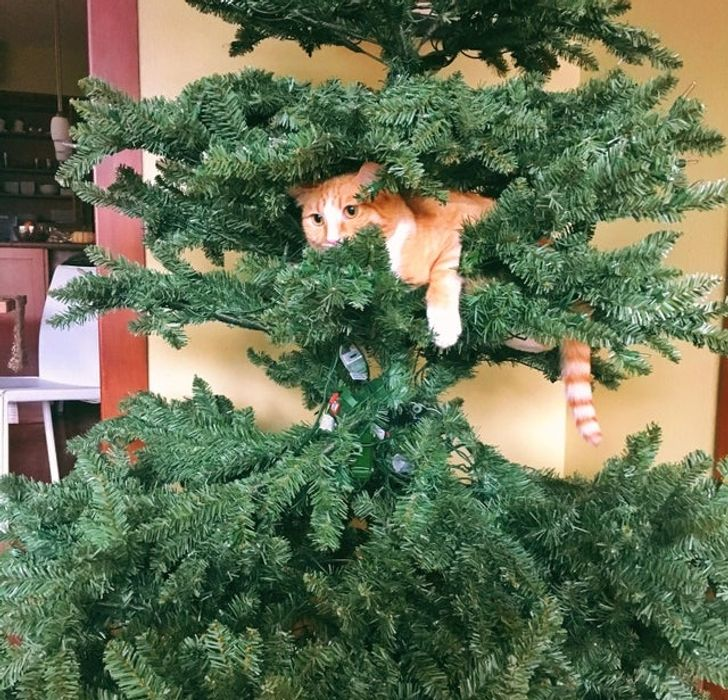 18 доказательств того, что котику нельзя просто так взять и пройти мимо елки