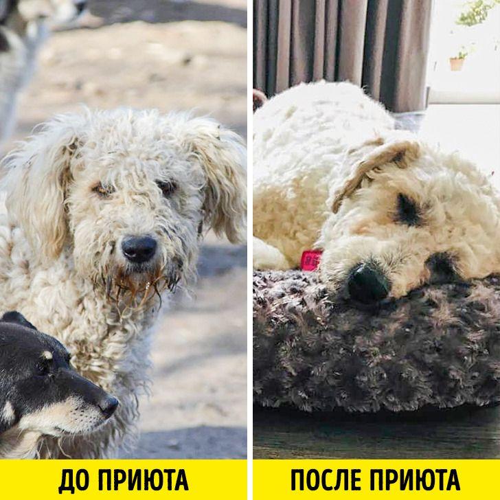 Как простой электрик открыл приют, чтобы спасти тысячи собак и решить проблему, с которой не справилась целая страна