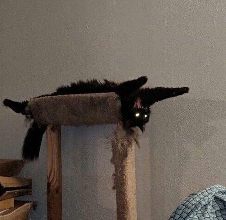20 суровых котов, которые ничего не спустят с лап