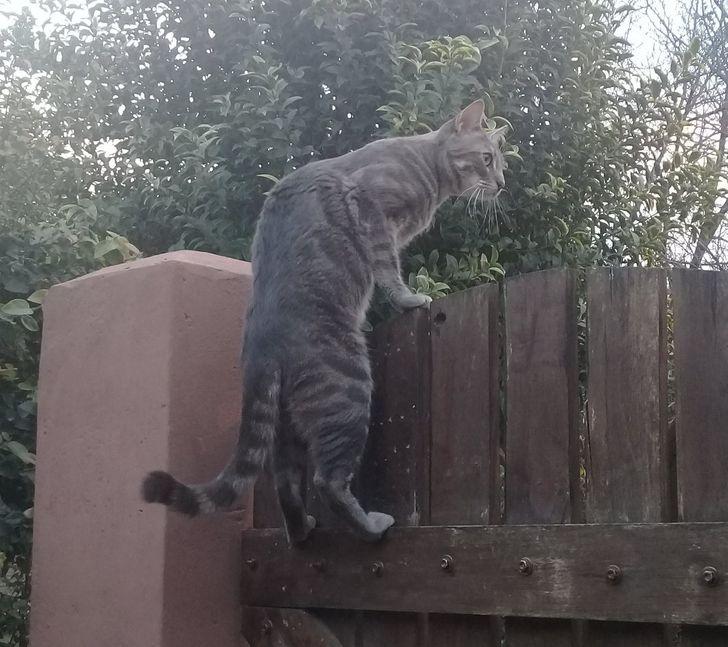 20+ котов, чьи безумные проделки доказывают, что смекалки у этих хвостатых хоть отбавляй