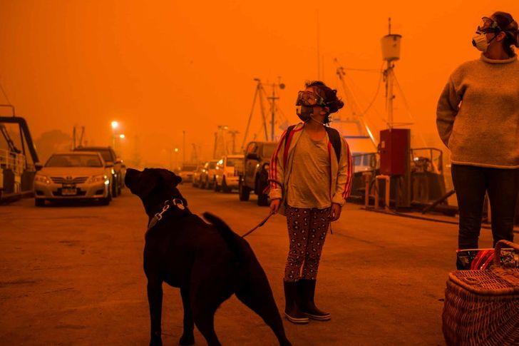 Что происходит в Австралии и кто прямо сейчас спасает от огня людей и животных