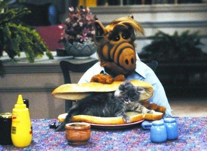 11научных объяснений, почему мыживем наусловиях кошек. Аненаоборот