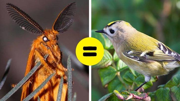 15существ, которым эволюция подарила такие способности, окаких человек может только мечтать