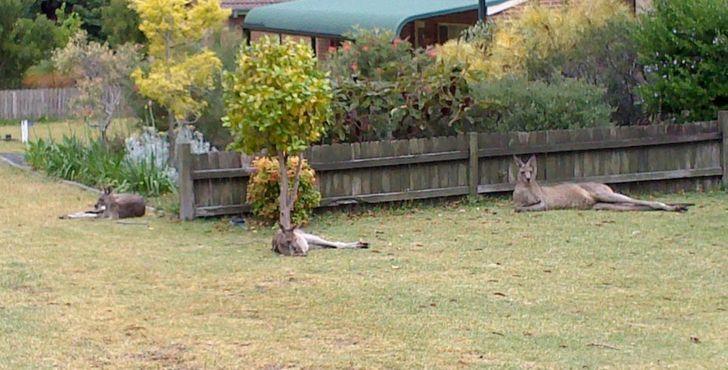 20 доказательств того, что Австралия — крутая страна. Но восхищаться ею лучше издалека