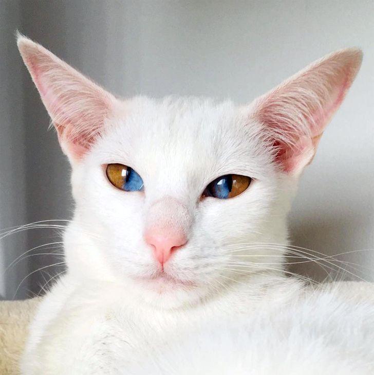 20 кошек, которых природа наградила настоящей изюминкой