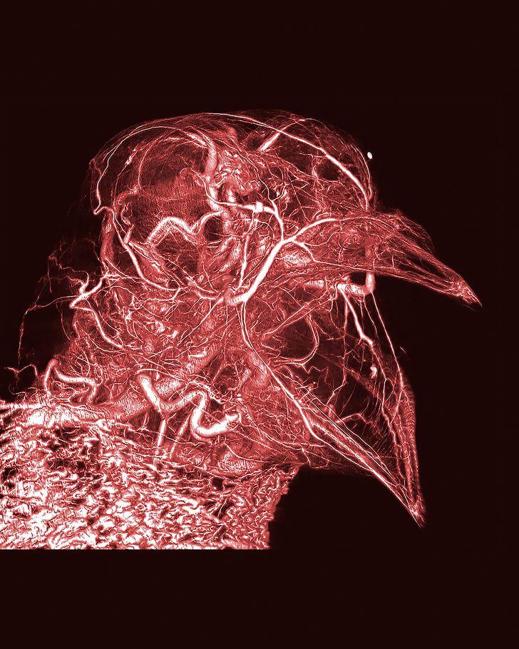 16фотографий, доказывающих, что наука круче любого искусства