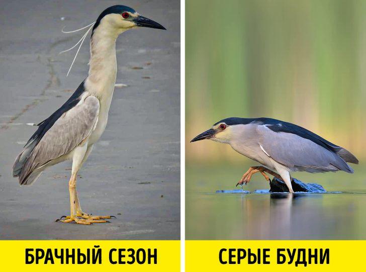 17 уникальных животных и птиц, которые получили от природы сполна (И даже не собираются жаловаться)