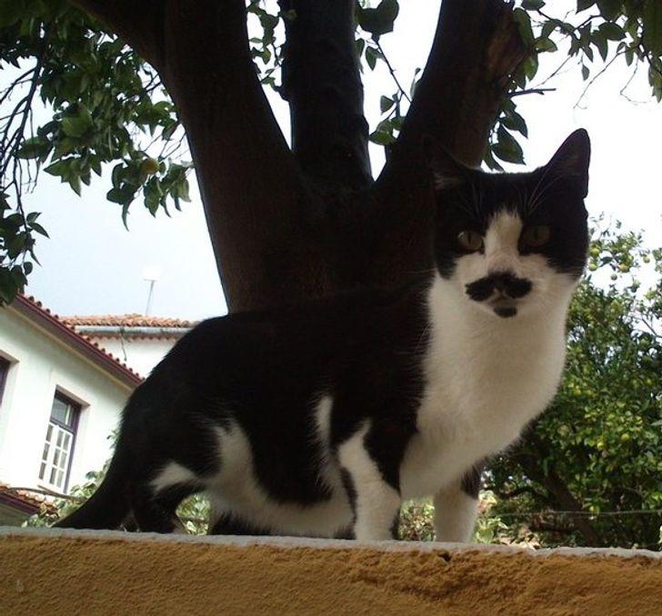 25+ котов с безумным окрасом, который выглядит как остроумный фотошоп