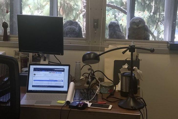 19 доказательств того, что, если ваши дни в офисе скучны, вы работаете не в том месте